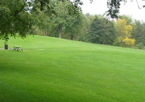 Ландшафтный декоративный газон